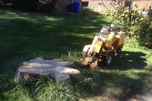 Photo #1: TREE STUMP GRINDING