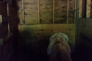 Photo #4: Pony stall for Rent 350.