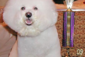 Photo #10: The DOG HOUSE. DOG & CAT Grooming Services