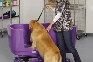 Photo #9: The DOG HOUSE. DOG & CAT Grooming Services