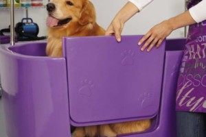 Photo #8: The DOG HOUSE. DOG & CAT Grooming Services