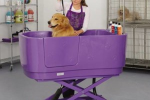 Photo #7: The DOG HOUSE. DOG & CAT Grooming Services