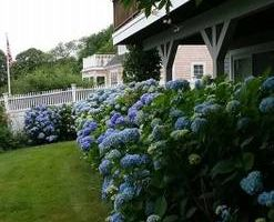Photo #6: Best Estate Maintenance and Irrigation with Lowest Prices!