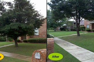 Photo #2: Foley Landscape Services: trimming, planting, mulching no contracts!