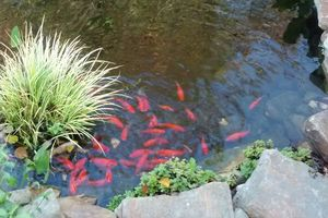 Photo #11: Unique Yardscapes Koi Ponds and Stonework