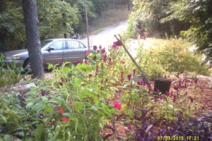 Photo #10: FLOWER GARDENING AND LANDSCAPING