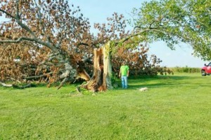 Photo #22: HODGES TREE TRIMMING (WE SPECIALIZE IN DANGEROUS TREE REMOVAL)