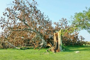 Photo #6: HODGES TREE TRIMMING (WE SPECIALIZE IN DANGEROUS TREE REMOVAL)