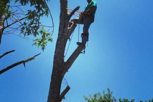 Photo #1: Affordable Jolley's Tree Trimming and Removal