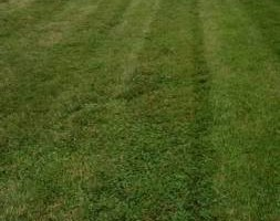 Photo #1: Professional Lawn Care At An Affordable Price