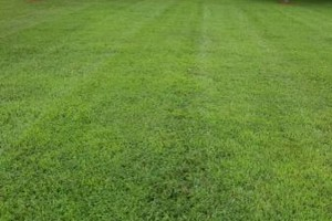 Photo #1: Lawn care service - mowing, edging, blowing