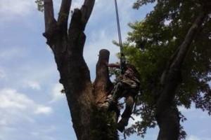 Photo #1: TRACY'S TREE SERVICE