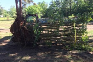 Photo #2: SITE PREP, LAND CLEARING, FOOTINGS, DRIVEWAYS ETC.