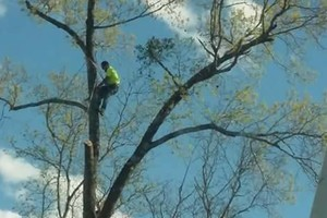 Photo #1: Tree trimming by JJ Tree Service