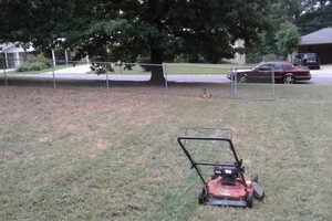 Photo #7: Terrance's lawn services - $25 and up!