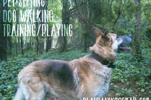 Photo #2: Pet sitting, Farmhand, Dog Walking, & Training!