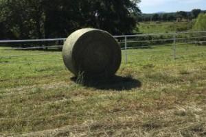 Photo #5: Custom hay bailing