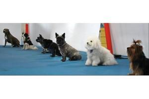 Photo #1: A Better Way Dog Training**Adult Dog Classes Sunday**Bob Gutierrez**
