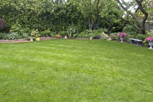 Photo #1: Bastrop county Yard mowing & Lawn service
