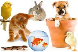Photo #1: Pet sitter