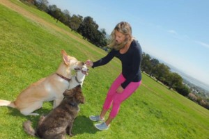 Photo #6: Learn PROVEN Dog Training Techniques from a Master Dog Trainer