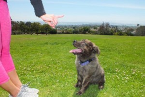 Photo #3: Learn PROVEN Dog Training Techniques from a Master Dog Trainer