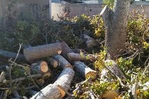 Photo #5: Sanchez tree services and clean ups