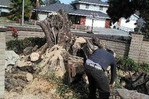 Photo #4: Sanchez tree services and clean ups