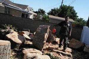 Photo #3: Sanchez tree services and clean ups