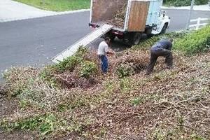 Photo #1: Sanchez tree services and clean ups