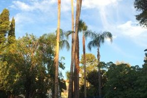Photo #4: PRO TREE TRIMMING/ REMOVAL. FREE ESTIMATES