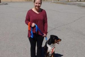 Photo #3: Newwalkk9. Dog Training: Obedience.