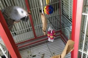 Photo #1: OC PARROT NANNY ~ Pet Sitter for Birds