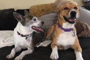 Photo #8: Doggie Bed n Breakfast. Boarding, Daycare, swimming and more!