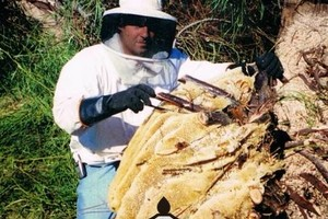 Photo #7: HONEY BEE REMOVAL, LIVE N CHEMICAL FREE!...