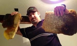 Photo #3: HONEY BEE REMOVAL, LIVE N CHEMICAL FREE!...