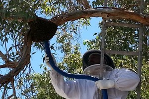 Photo #2: HONEY BEE REMOVAL, LIVE N CHEMICAL FREE!...