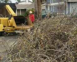 Photo #9: Professional Coronado tree service