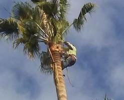 Photo #6: Professional Coronado tree service