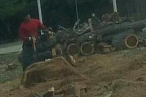 Photo #5: Professional Coronado tree service
