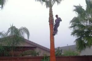 Photo #2: Professional Coronado tree service