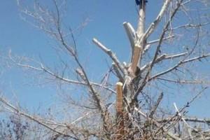 Photo #1: Professional Coronado tree service