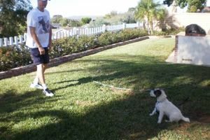 Photo #16: OC K-9 Services. Puppy Training, Human Trainingю 50%Discount!!