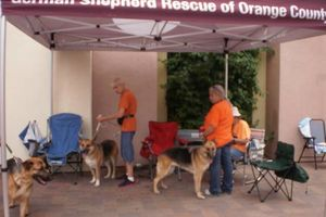Photo #11: OC K-9 Services. Puppy Training, Human Trainingю 50%Discount!!