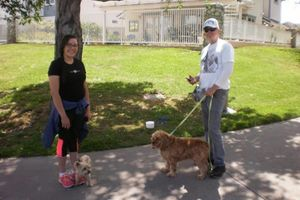 Photo #1: OC K-9 Services. Puppy Training, Human Trainingю 50%Discount!!