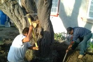 Photo #6: Tree Service & Tree Trimming, Removal