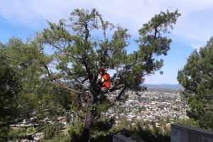 Photo #3: Tree Service & Tree Trimming, Removal