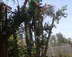Photo #1: Tree Service & Tree Trimming, Removal