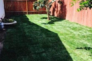Photo #20: Yard Maintenance by Cardenas Gardening
