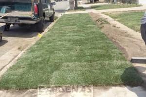 Photo #15: Yard Maintenance by Cardenas Gardening